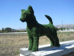 Chihuahua Frame Topiary 12 inches tall
